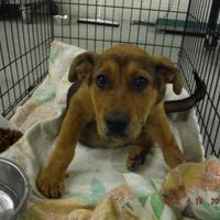 Adopt A Pet :: Ted - justin, TX