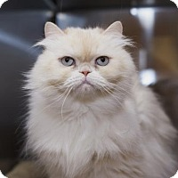 Adopt A Pet :: Fah - Palm Springs, CA