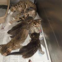 Adopt A Pet :: Ava - Baton Rouge, LA