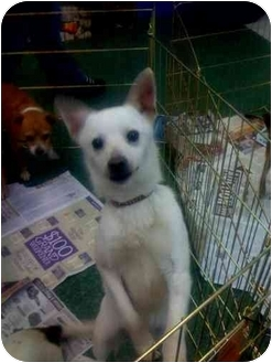 Terrier (Unknown Type, Small)/Terrier (Unknown Type, Small) Mix Dog for adoption in Fowler, California - Remy