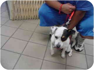 Terrier (Unknown Type, Small) Mix Dog for adoption in Marshalltown, Iowa - Kimmie