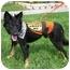 Photo 3 - Collie/Sheltie, Shetland Sheepdog Mix Dog for adoption in Homestead, Florida - CL Tucker Boy