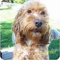 Adopt A Pet :: Max - Dayton, OH