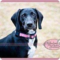 Adopt A Pet :: Ophette - Haverhill, MA