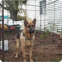 Adopt A Pet :: Thor - Chase, MI