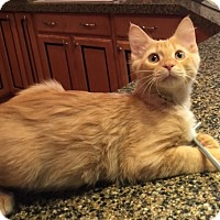 Adopt A Pet :: Sebastian - Birmingham, AL