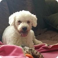 Adopt A Pet :: Sampson - adoption pending - Norwalk, CT