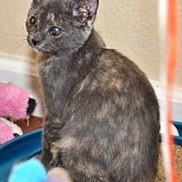 Adopt A Pet :: Pollyanna - Davis, CA