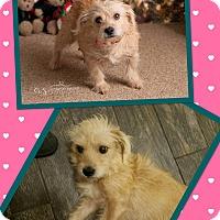 Adopt A Pet :: Mona - Scottsdale, AZ