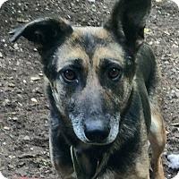 Adopt A Pet :: Louise - Oak Ridge, NJ