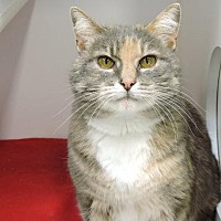 Adopt A Pet :: Marilou - Park City, UT
