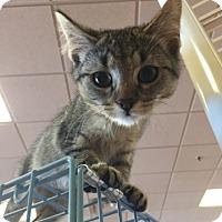 Adopt A Pet :: Nell - LaGrange Park, IL