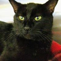 Adopt A Pet :: Prescott - Waldorf, MD