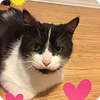 Adopt A Pet :: Maddie - Highland, MI