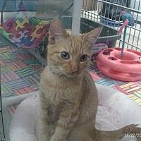 Adopt A Pet :: Rachel - Houston, TX