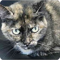 Adopt A Pet :: Petra - Markham, ON