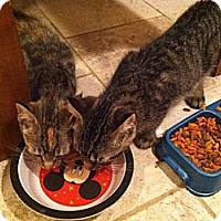 Adopt A Pet :: Cinnamon - Riverhead, NY