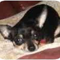 Adopt A Pet :: Rocky - Pembroke Pines, FL