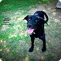 Adopt A Pet :: Lucy - Gadsden, AL