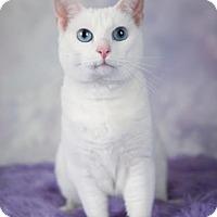 Adopt A Pet :: Luna - Eagan, MN