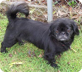 Pekingese Dog for adoption in Wetumpka, Alabama - #81338  'Princess'