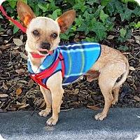 Adopt A Pet :: ISAAC - Inland Empire, CA