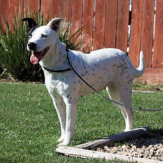 Border Collie Mix Dog for adoption in Stockton, California - Iris