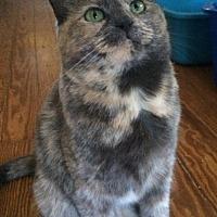 Adopt A Pet :: Rosie - Devon, PA