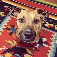 Adopt A Pet :: Frankie - Boston, MA