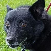 Adopt A Pet :: Skip - Lexington, KY