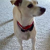 Adopt A Pet :: Missey - Alpharetta, GA