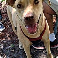 Adopt A Pet :: Jessie - Grand Island, FL