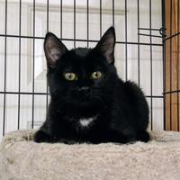 Adopt A Pet :: Derek - Calgary, AB