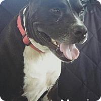 Adopt A Pet :: Margie Petunia Picklebottom - Denver, CO