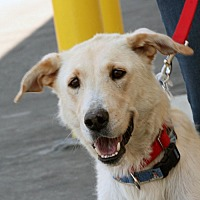 Adopt A Pet :: Bree - Palmdale, CA