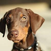 Adopt A Pet :: Hazel - Palmdale, CA