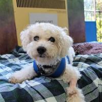 Adopt A Pet :: Jessie - San Francisco, CA