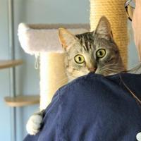 Adopt A Pet :: Sandra - Encinitas, CA