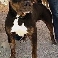 Adopt A Pet :: Jewel - Las Vegas, NV