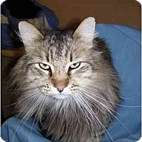 Adopt A Pet :: Simba - Jenkintown, PA