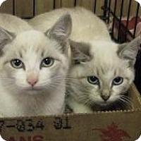 Adopt A Pet :: DEka - Jacksonville, FL