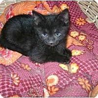 Adopt A Pet :: babby boy - Etobicoke, ON