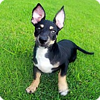 Adopt A Pet :: Zeus - Honolulu, HI