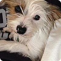 Adopt A Pet :: Lulu - Hilliard, OH