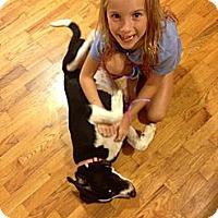 Adopt A Pet :: LUCY-PUPPY LOVE!! - Bluff city, TN