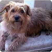 Adopt A Pet :: McKenzie - dewey, AZ