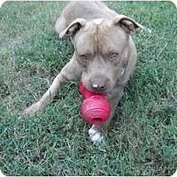 Adopt A Pet :: Dr Sunshine - Seneca, SC