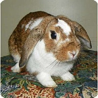 Adopt A Pet :: Bojangles - North Gower, ON