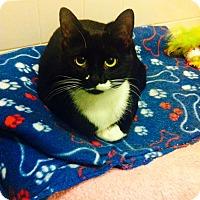 Adopt A Pet :: Dominique - Chicago, IL