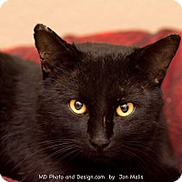 Adopt A Pet :: Phillip - Fountain Hills, AZ